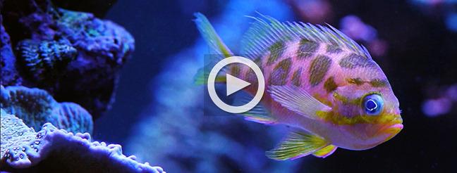 orbit-fish-videoplay