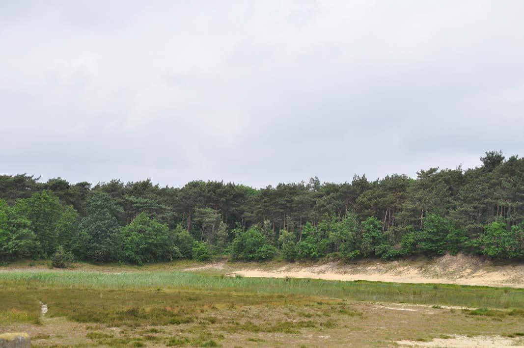 Bergsche Heide foto  s zomer 2012