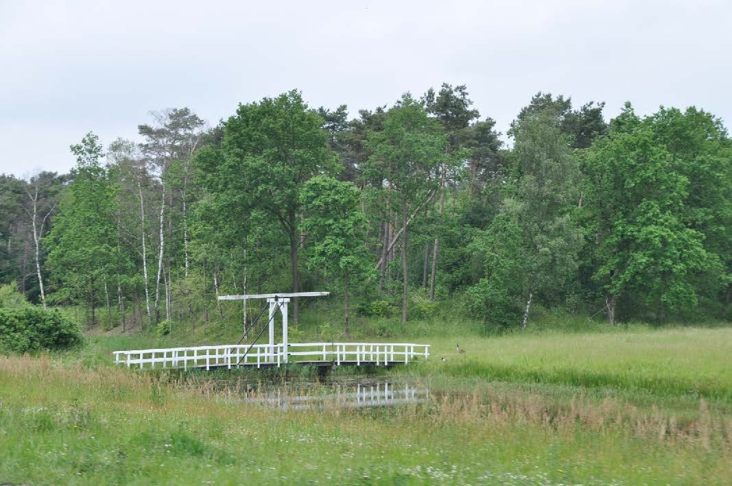 Bergsche Heide foto  s zomer 20121