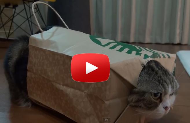 CatVideo