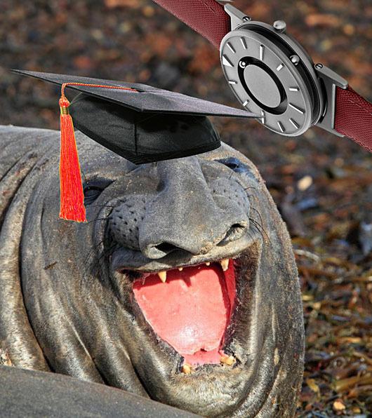 grad-elephantseal
