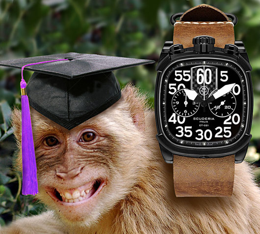 grad-monkey