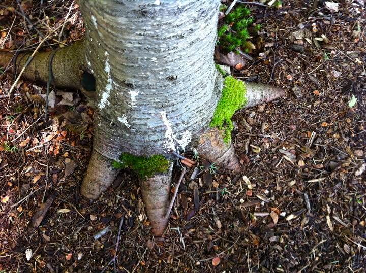 Edge tree