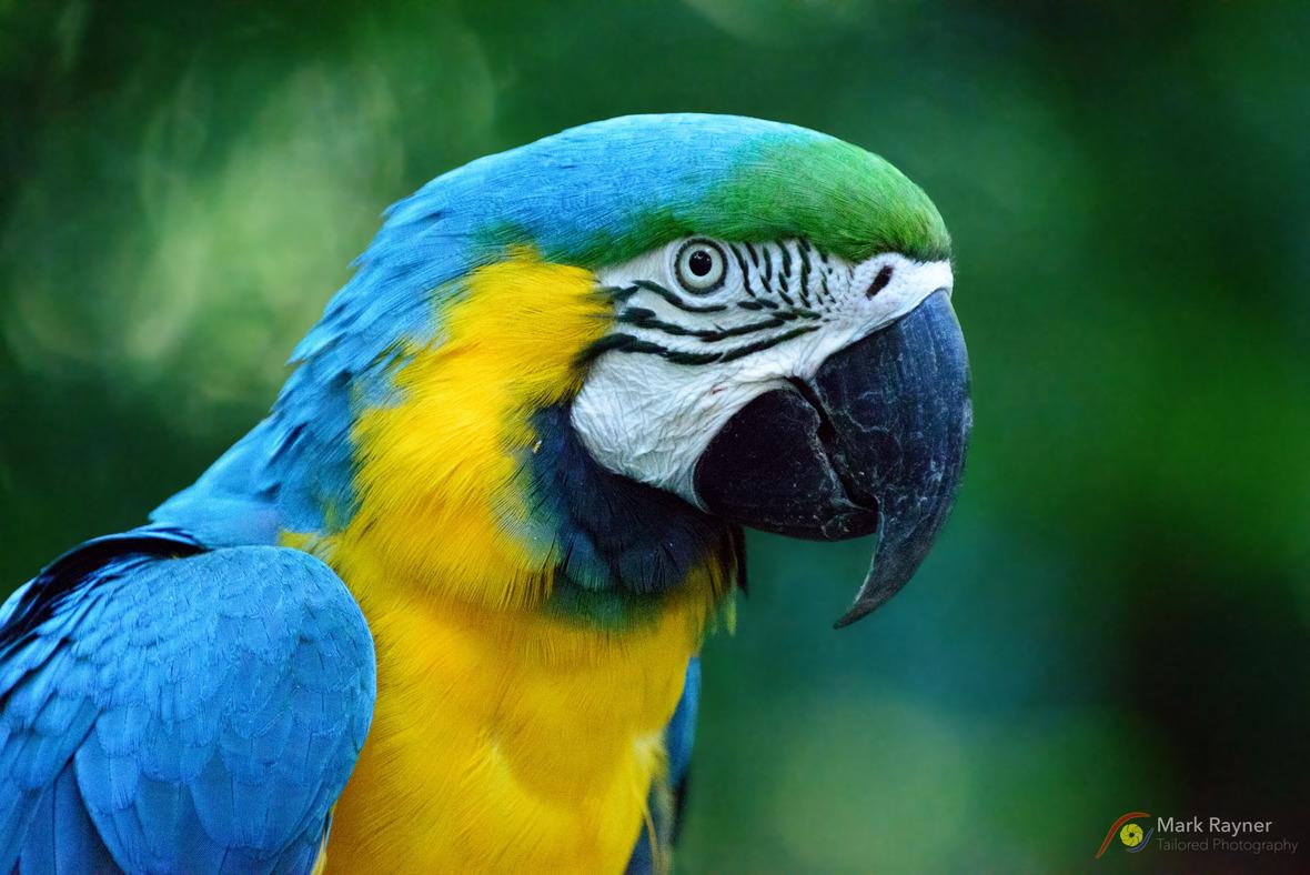 20140802 152734 Australia Zoo MR23226-Edit