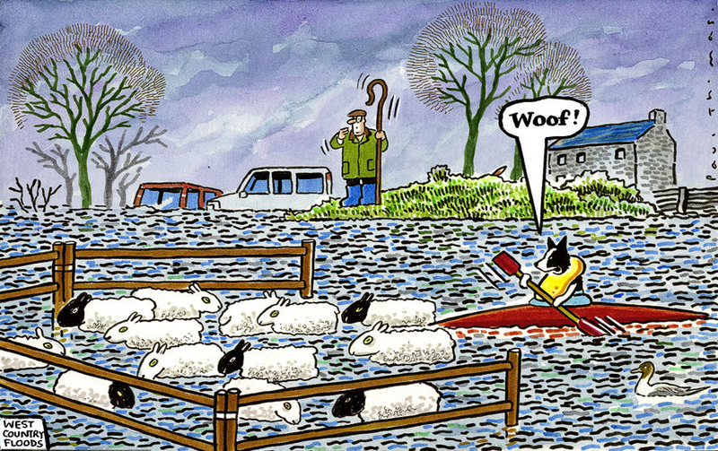 flood sheep