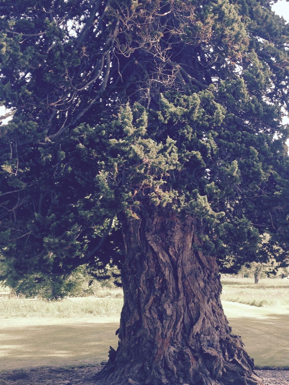 Scotland-workshop-tree