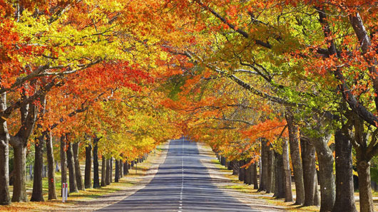 road-side-trees-83897-530