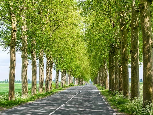 tree-lined-road-france-530