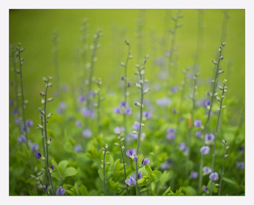 Blue Indigo-6 GailSHaile