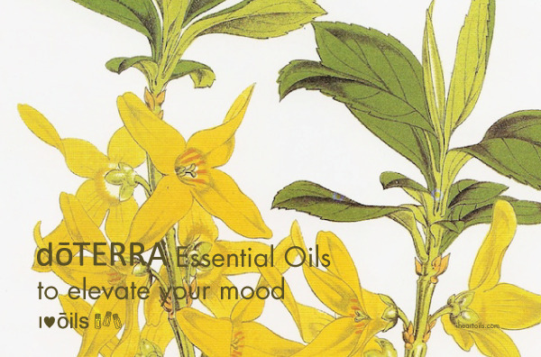 FREE Essential Oil Magazine and Learn about Oils for MOOD
