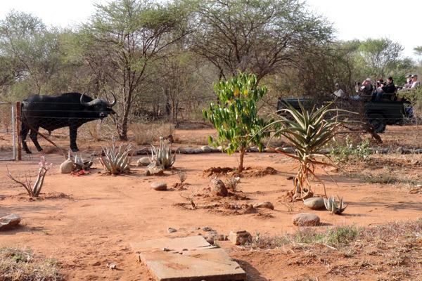 buff garden safari