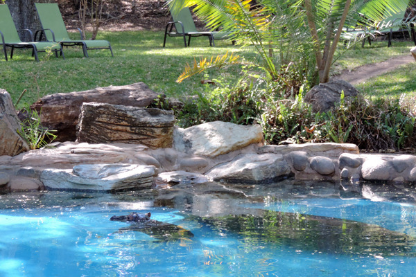 hippos pool2