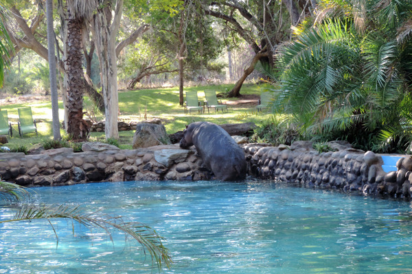 hippos pool5