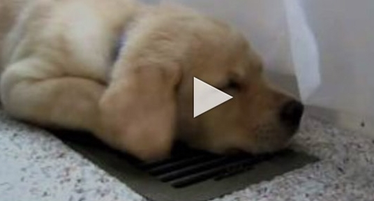 DogVideo
