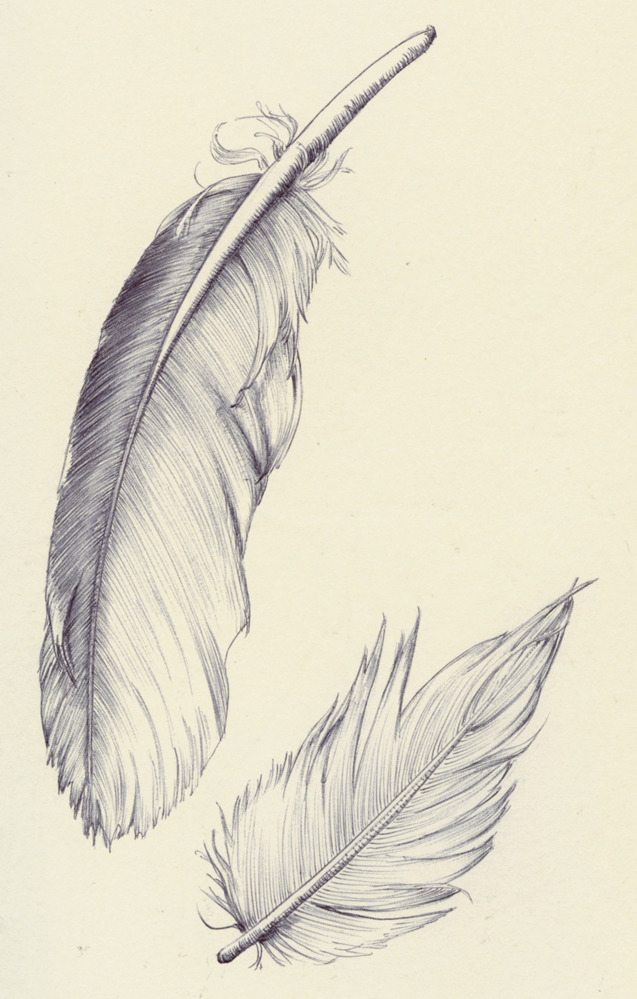 20150801 feathers