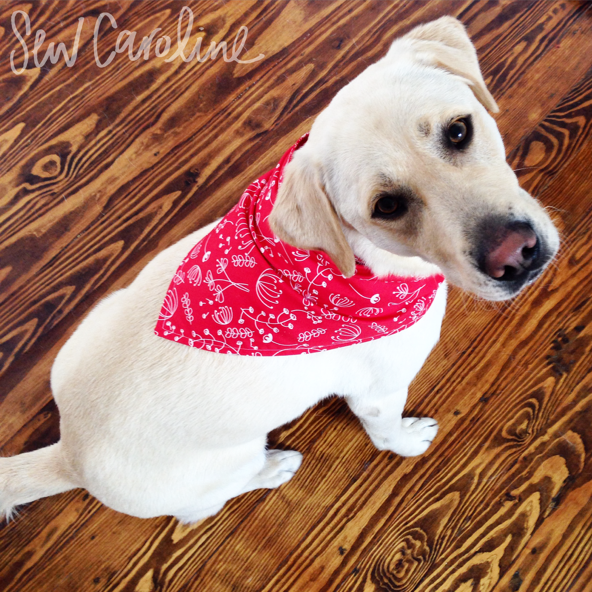 carolinehulse- free Dog-Bandana tutorial and pattern