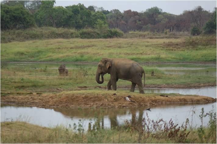 Elephant WG 03