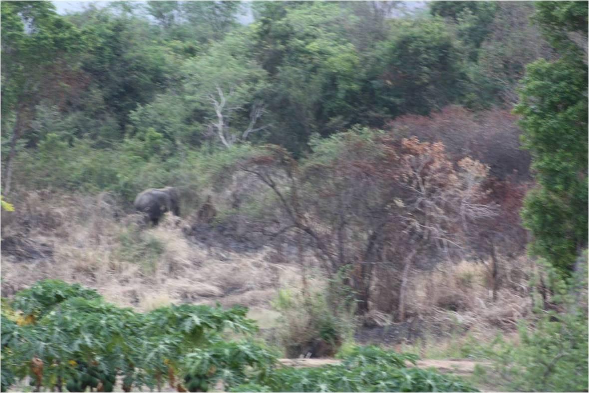Elephant WG 02