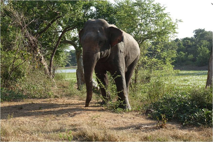 Elephant WNP 01
