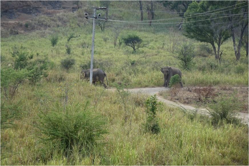 Elephant WG 04