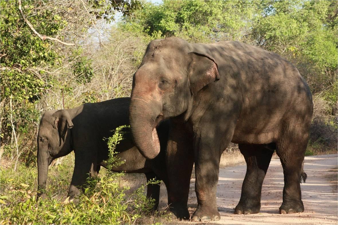 Elephant WNP 02
