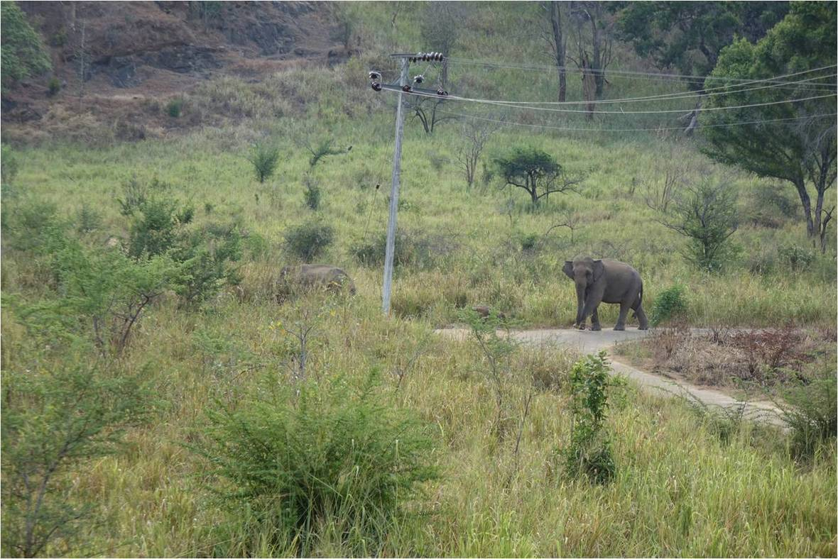 Elephant WG 05