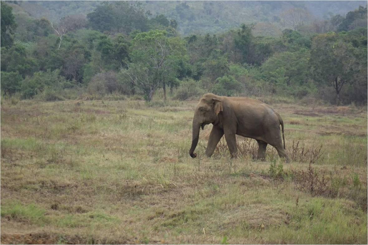 Elephant WG 01