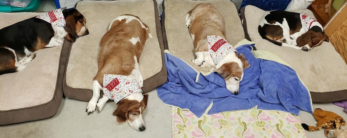 4 sleepy hounds