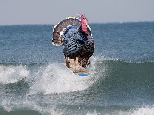 surfin turkey
