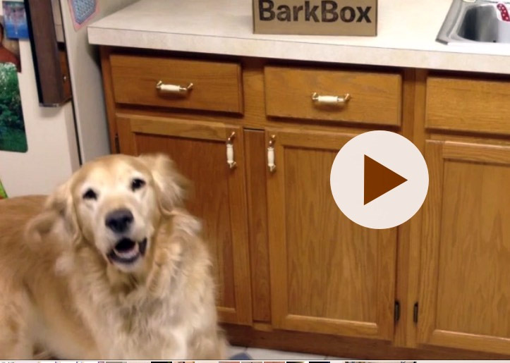 BarkBoxVideo
