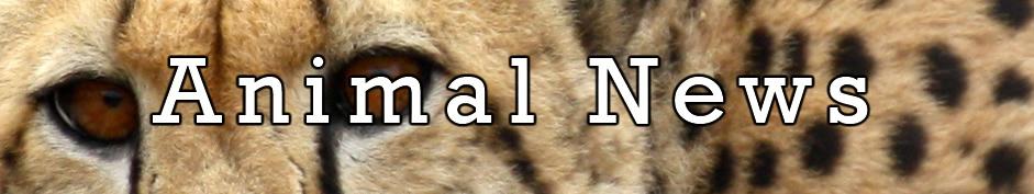 Animal Header