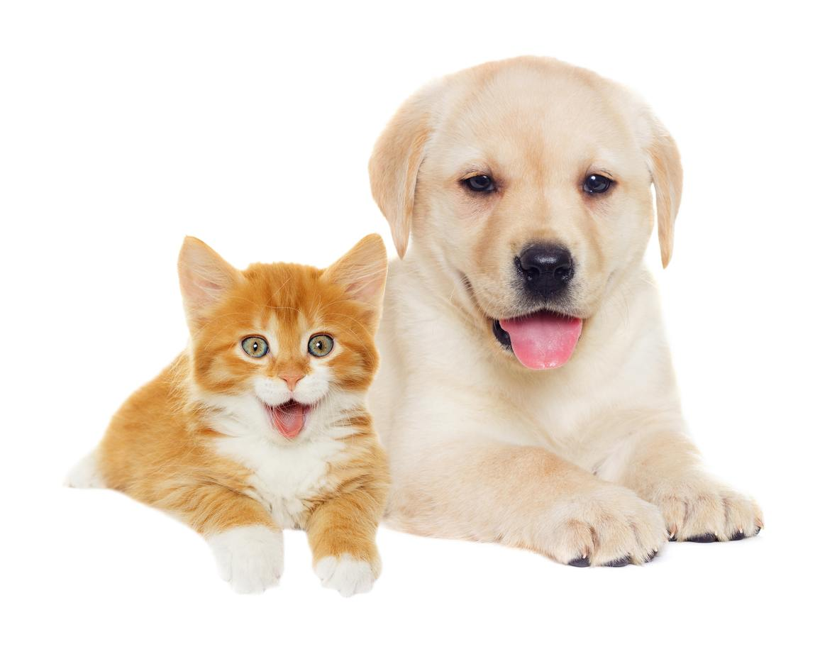 cat-and-dog-555234