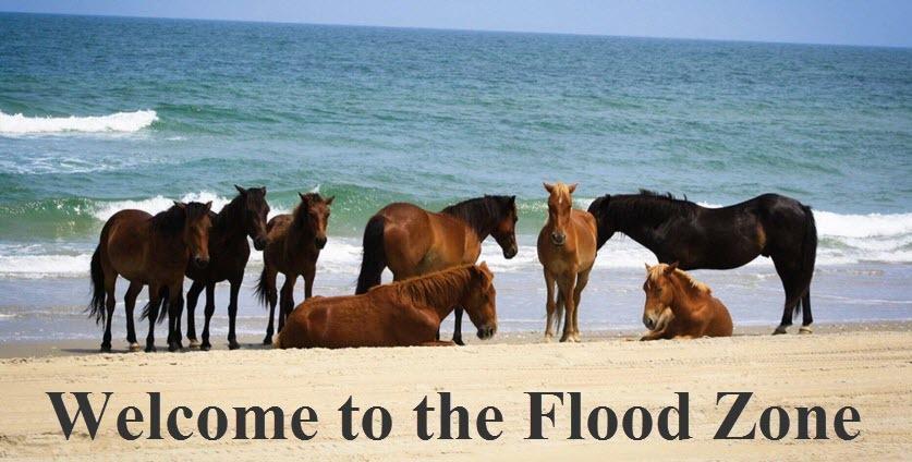 wild-horses-north-carolina-iStock