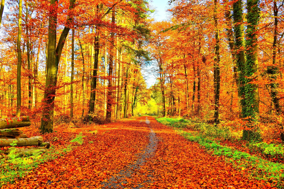 Canva - Golden Autumn Path in the Forest