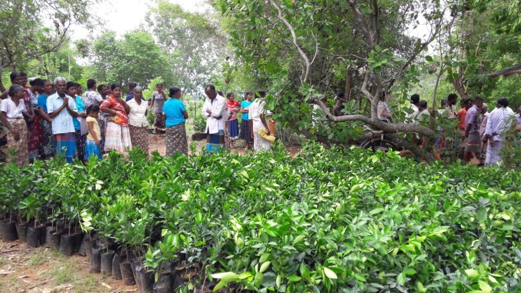02. POE 5000 Plants