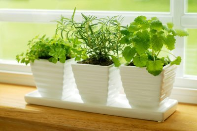 indoor-container-garden