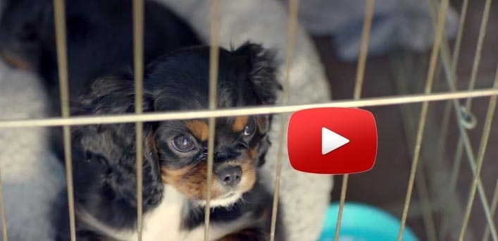 AdoptionDogVideo