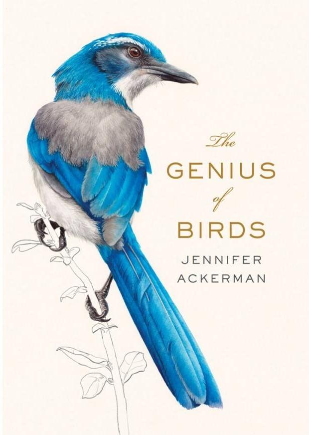 geniusofbirds