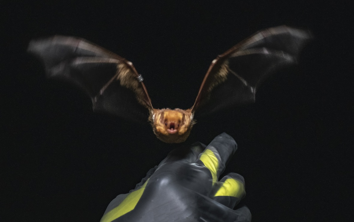 The Chasing Frames Show with Tamara Lackey Episode 04 Bat Blitz Bat flying at Tamara