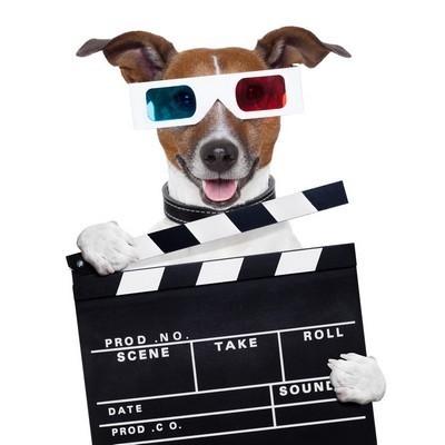 dog-filming