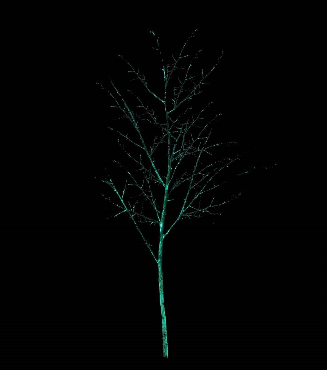 lichtgevende bomen2 HH