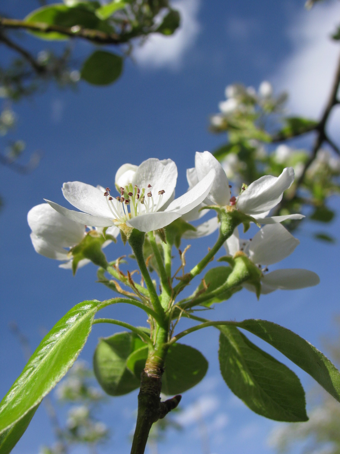 bloomin-trees-4-1355145