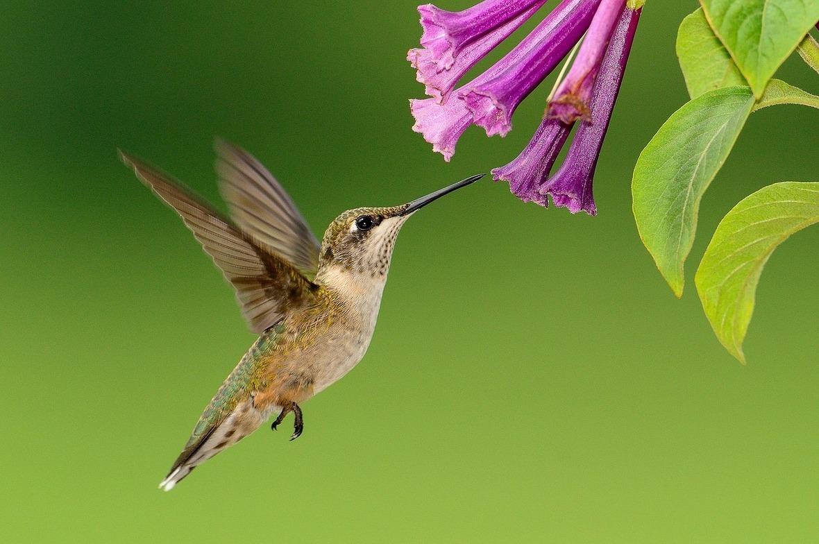 hummingbird-1056383 1280