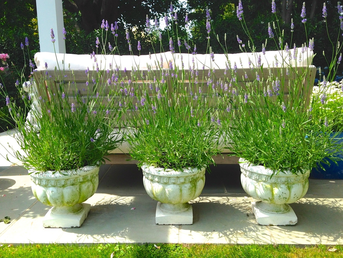 Time to get your 2016 hamptons green thumb in gear for Lynch s garden center
