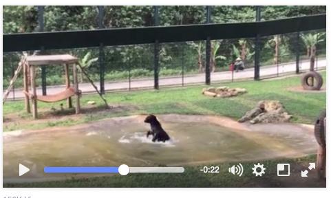 Tuffy jumps for Joy