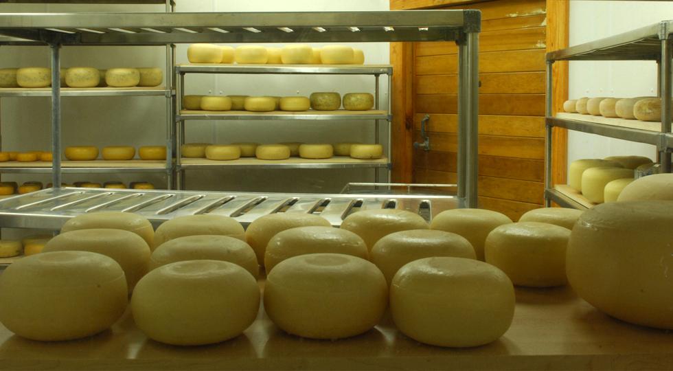 wgm cheese1 1