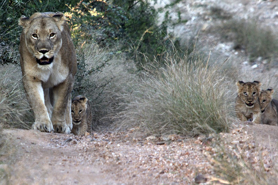 LION CUBS DSC 0591