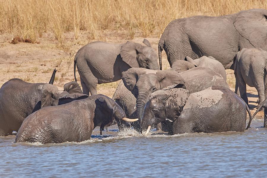 Suedafrika 2019 Elefanten DD5 3256