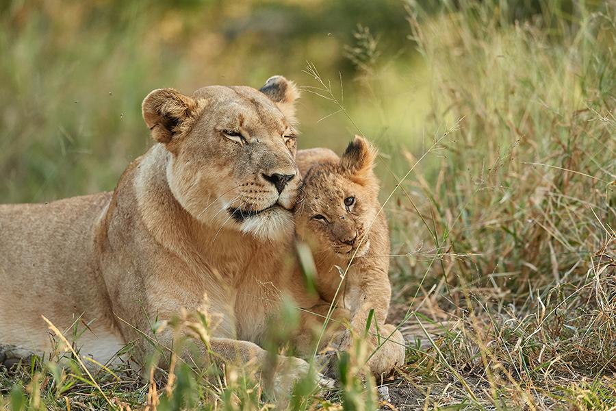 Suedafrika 2019 Katzen usw DD5 5058