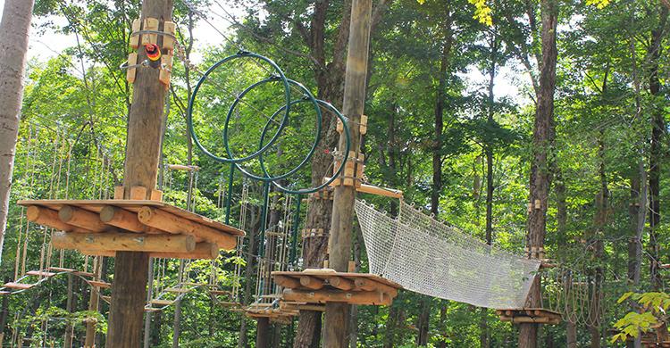 Treetop preseason